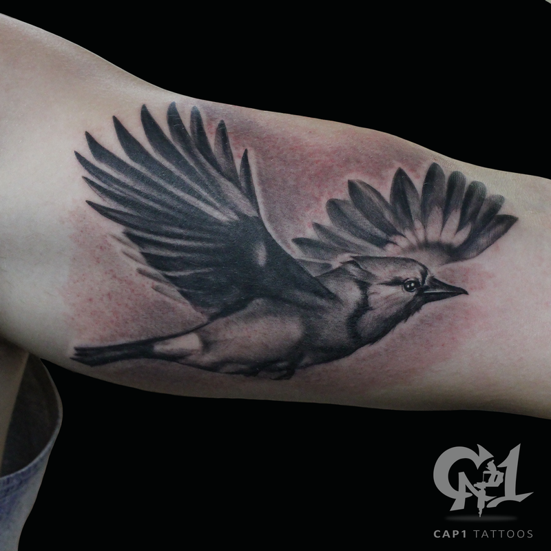 Flying blue jay by capone tattoonow for Tattoo shops denton tx