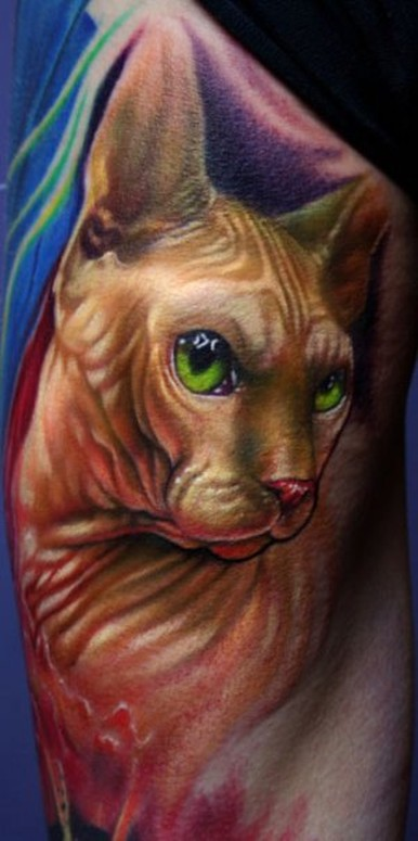 Hairless cat tattoo by paul acker tattoonow for Hairless cats with tattoos