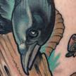 Crow and Ram's skull Tattoo Tattoo Design Thumbnail