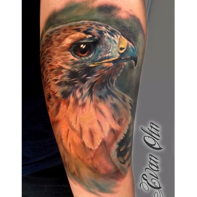 Full color realistic hawk tattoo by Evan Olin Tattoos