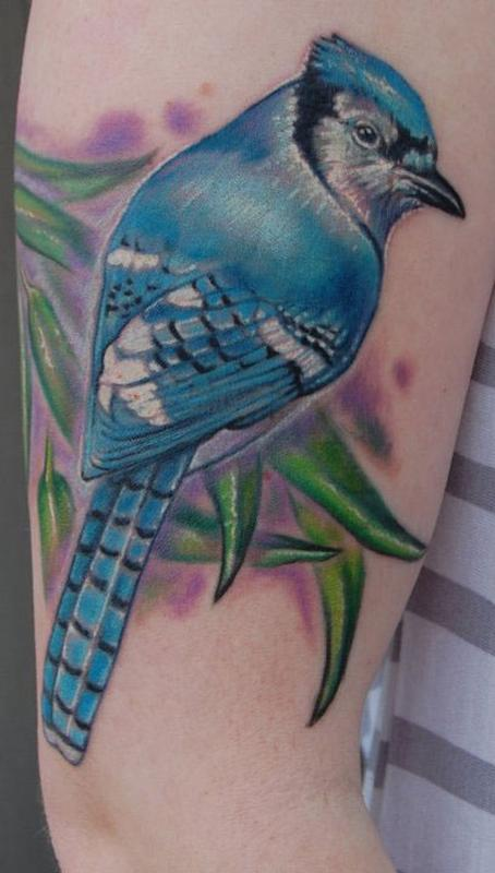 Realistic color blue jay tattoo by Evan Olin : Tattoos